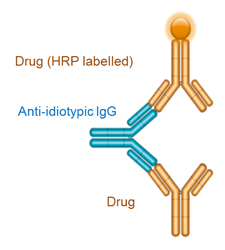 Figure 1: Anti-idiotypic antibody (blue) used in a bridging format in an immune response assay
