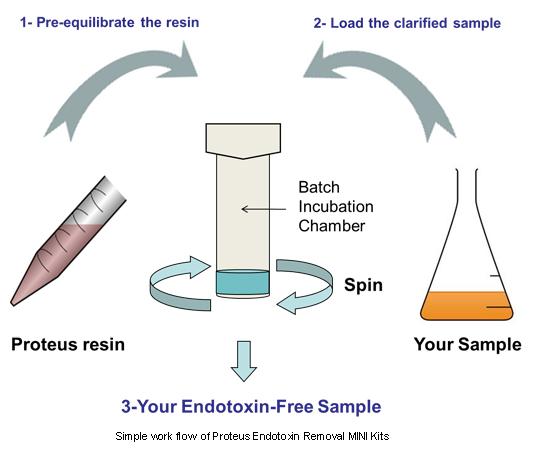 Simple workflow of Proteus Endotoxin Removal MINI Kits