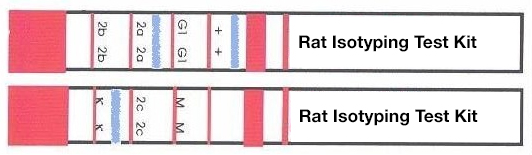 Rat antibody isotyping kit strips