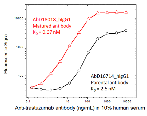 Trastuzumab ADA assay with affinity matured and parental antibodies