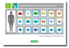 Lineage Biomarkers of Human Immune System Guide