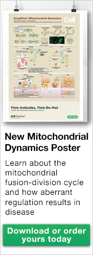 New Mitochondrial Dynamics Poster