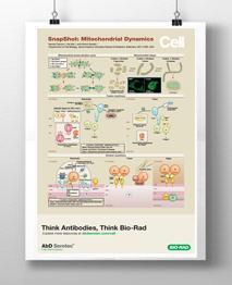 Mitochondrial dynamics logo