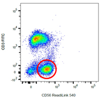 Fig 2. Purified CD56 (MCA2693) was labeled with ReadiLink 405/537 and used to stain human peripheral blood in combination with CD3 FITC (MCA463F).