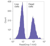 A mixture of live and heat-killed Jurkat cells were stained with ReadiDrop 7-AAD for 1 min prior to sorting