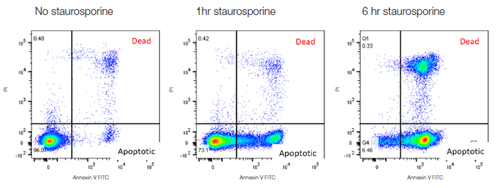 Fig 34 Annexin V staining to measure apoptosis.