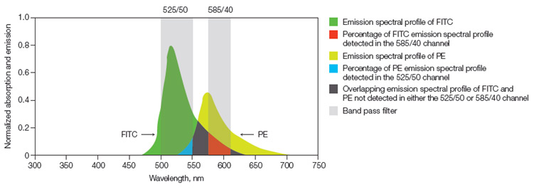 Fig. 1. Fluorescence compensation.