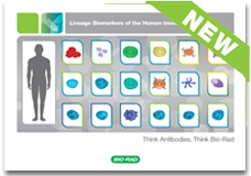 Lineage biomarkers of human immune system booklet –get your free copy today