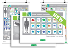New! Human and murine immune cell marker guides and posters