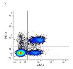 Fig. 2. RPE conjugated rat anti-mouse CD4 (MCA4635PE) and APC conjugated rat anti-mouse CD3 (MCA500APC). All experiments performed on murine splenocytes in the presence of murine SeroBlock (BUF041A).