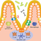 The structure and regulation of mucosal homeostasis and how this relates to disease and potential immunotherapy.