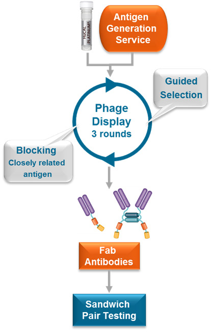 Process flow for ELISA pair selection