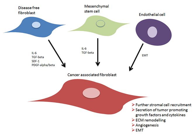 Development of cancer associated fibroblasts.