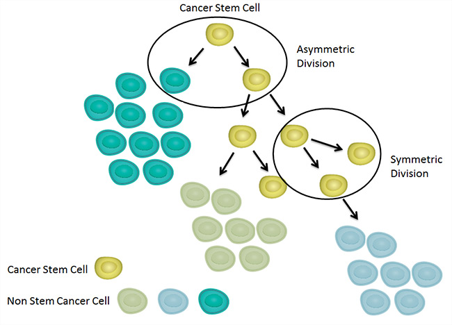 Fig. 2. Hierarchical model of tumor development.