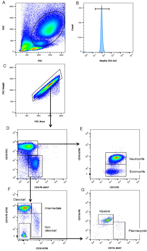 Fig. 4. Characterization of human myeloid cells using as 8-color panel.