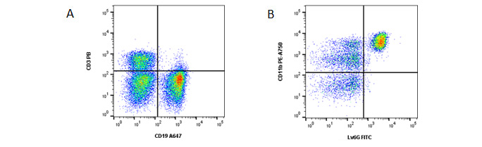 Fig 1. General panel. A, Identification of T and B cells. B, Identification of myeloid cells from the CD3- CD19- population. Data acquired on the ZE5 Cell Analyzer.