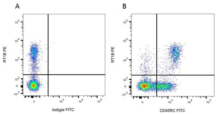 Fig.3. Flow cytometry analysis of rat RT1 marker RT1B.