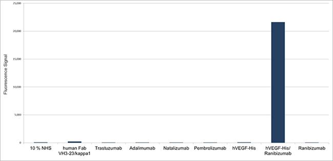 Fig. 4. Specificity of Human Anti-Ranibizumab/VEGF Antibody HC304.