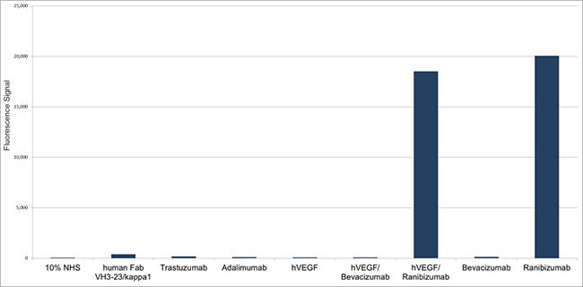 Fig. 5. Specificity of Human Anti-Ranibizumab Antibody HC306.