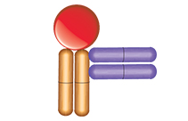 Anti-Ranibizumab Non-Inhibitory Antibodies