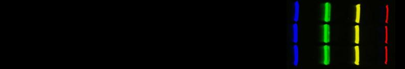 Multiplex Fluorescent Western Blotting