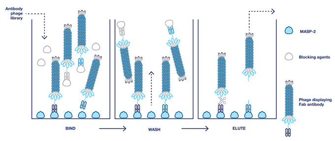 Fig. 1. Selection of antibodies with blocking
