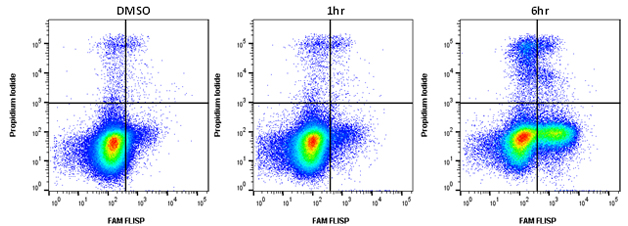 Fig 1. Active chymotrypsin-like serine protease activity staining by flow cytometry.