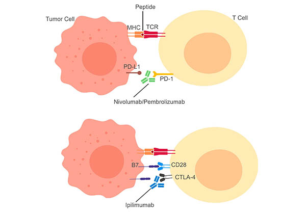 Fig.2. Principles of Immunotherapy.