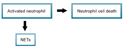NETotic cell death