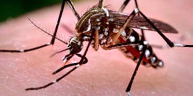 Four virus serotypes…One Dengue vaccine?