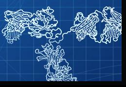 Rapid Custom Antibody Generation with HuCAL® Technology