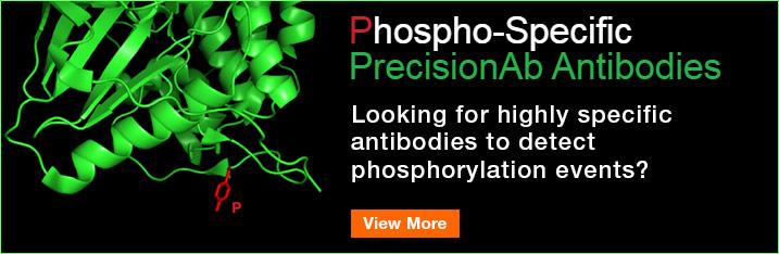 Phospho-Specific PrecisionAb Antibodies