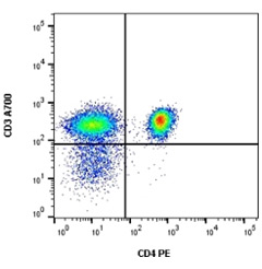 Fig. 1. PE staining.