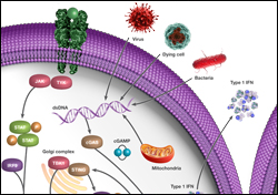 View the cGAS-STING Signaling Poster