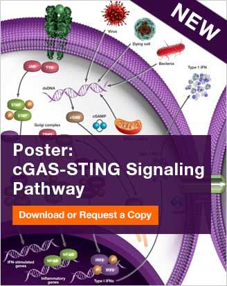 Poster: cGAS-STING Signaling Pathway