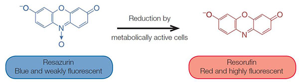 Mechanism of alamarBlue