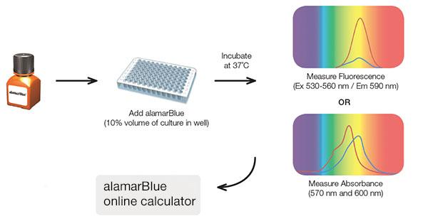 alamarBlue workflow