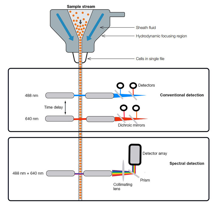 Diagram comparing spectral flow cytometry and conventional flow cytometry