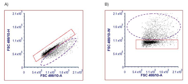 Fig.4. Single Cell Identification in Porcine Splenocytes.