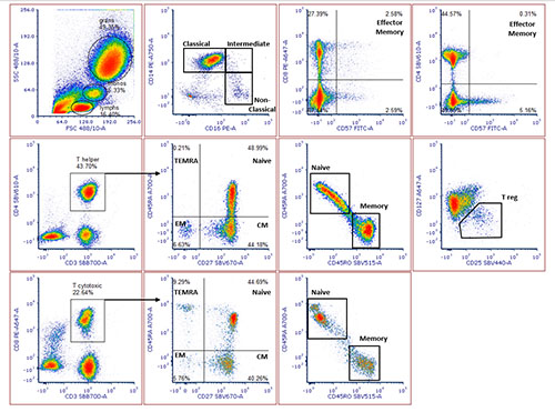 6 Steps for Success with Multicolor Flow Cytometry