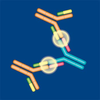 High affinity antibodies for improved analysis of antibody drugs