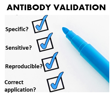 The road to antibody validation standards