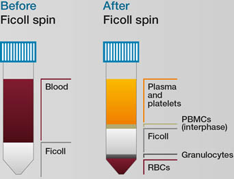 Ficoll to isolate red blood cells