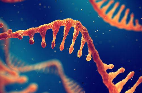 The Transcriptomic Swiss Army Knife— A-to-I RNA Editing