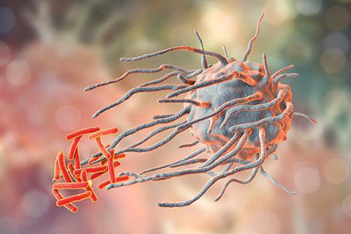 Macrophages May Explain Tuberculosis Tropism