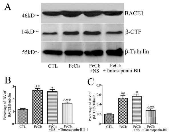 Amyloid Precursor Protein Antibody gallery image 3