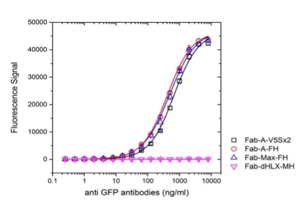 Alkaline Phosphatase Antibody | AbD25296_hIgG2 gallery image 3