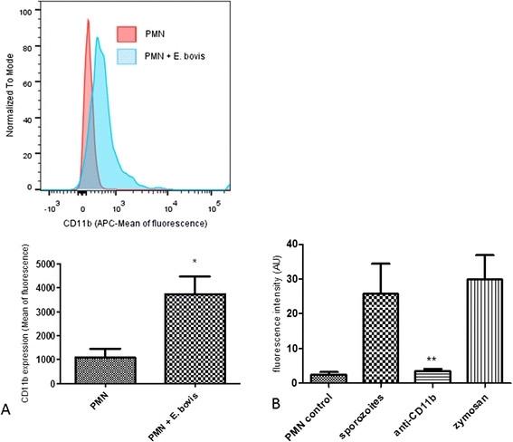 CD11b Antibody | CC126 gallery image 2