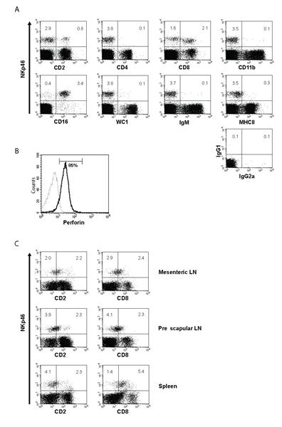 CD11b Antibody | CC126 gallery image 4