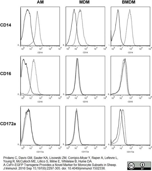 CD172a Antibody | CC149 gallery image 8